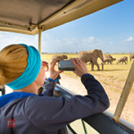 What's Sensational About Traveling To Africa